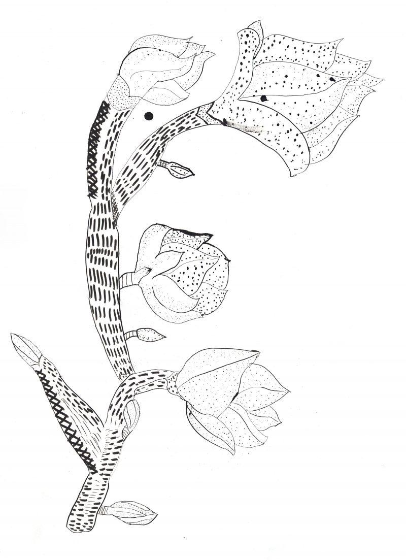 Flowering Stem