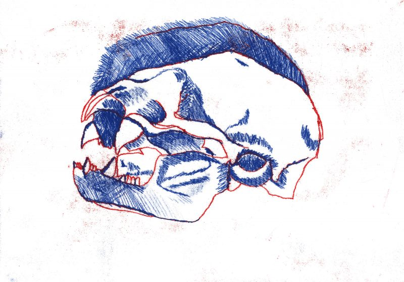 Vampire Bat Skull