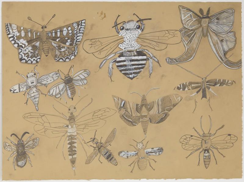 Moths & Flies