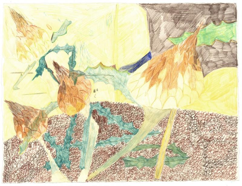 Yellow Thistle