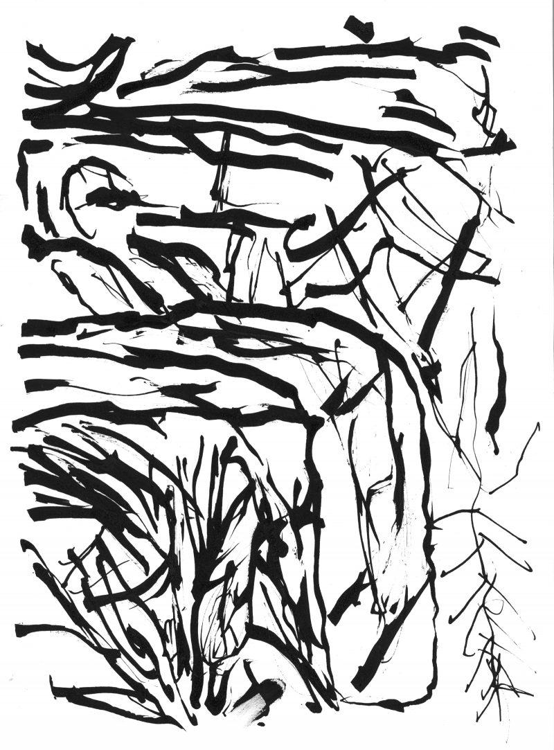 Leaf Forms in Black