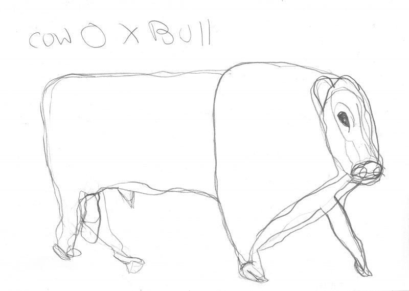 Cow Ox Bull