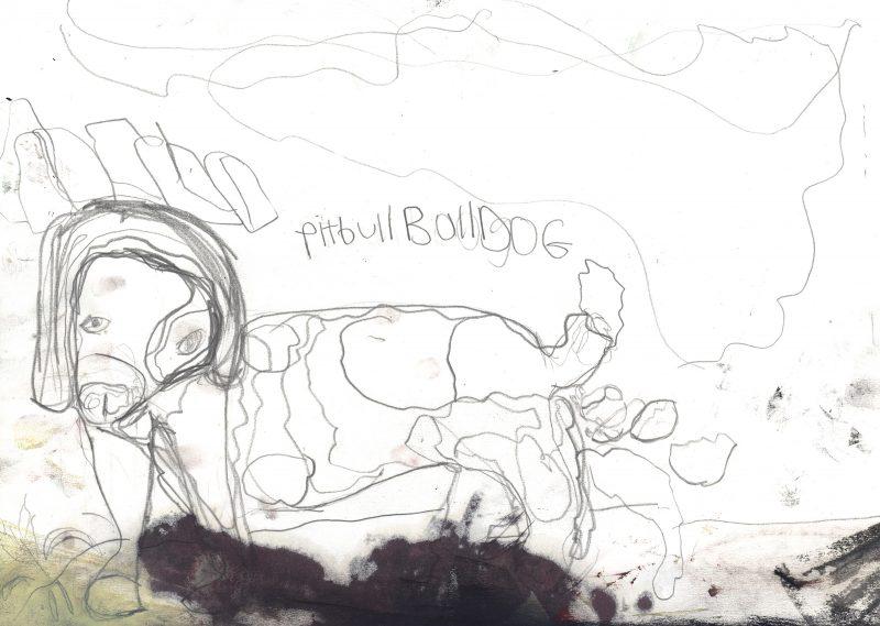Pitbull Bulldog